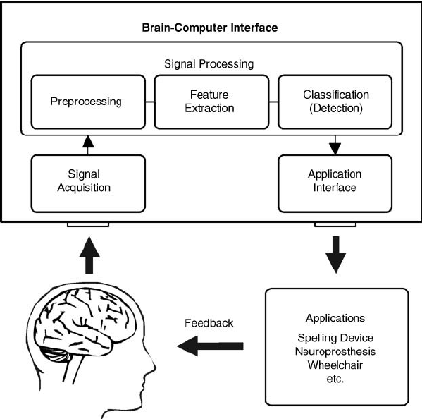 Components-of-a-BCI-system-signals-from-the-users-brain-are-acquired-and-processed-to.png